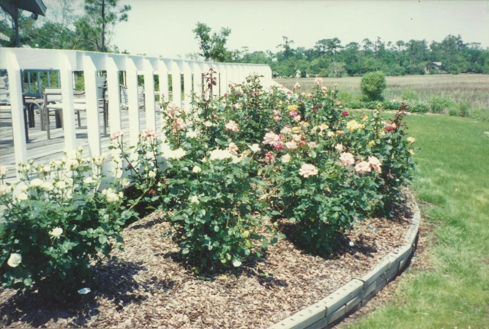 wappoo-cut-rose-garden